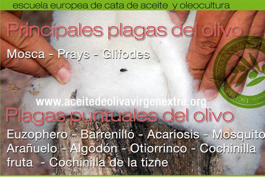 http://www.escuelaeuropeadecata.com/cursooliviculturamoderna.html