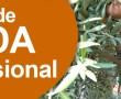 Curso de Poda profesional del Olivo con prácticas reales