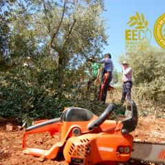Curso práctico de olivicultura, nutrición y poda del olivo