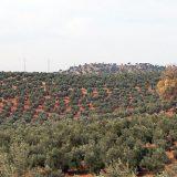 Optimismo entre los olivareros ante una relación calidad/precio equilibrada