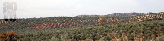 coag-y-optimsmo-olivicultores